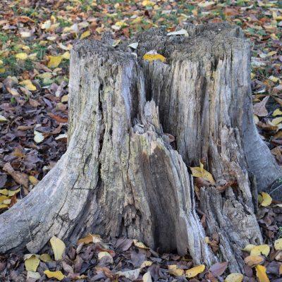 Ta bort stubbar i din trädgård