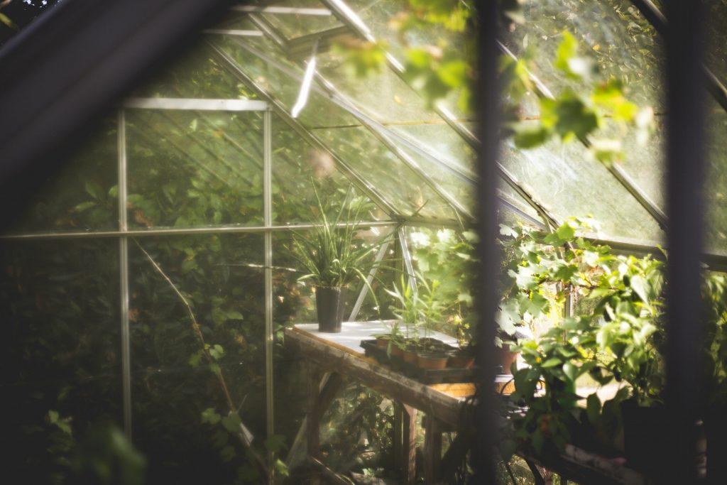Växthus med små plantor i krukor