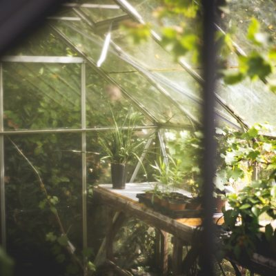 Växthus bevattning och bevattningssystem