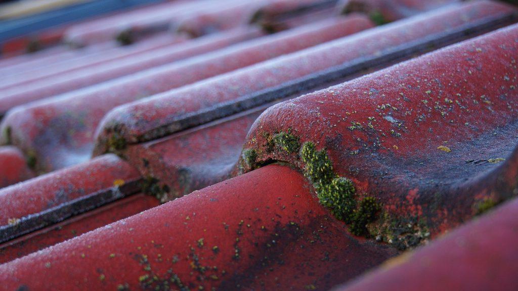 Början på mossväxt på takpannor